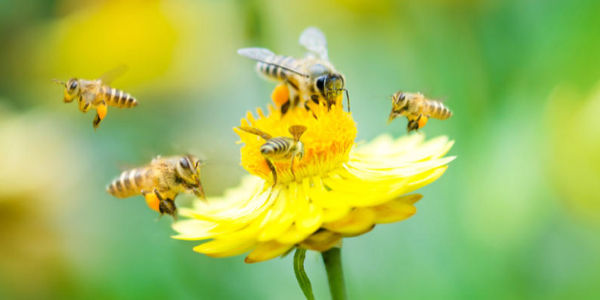 Save America's Crops From Bee Extinction!