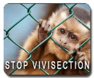 STOP VIVISECTION IN EUROPE