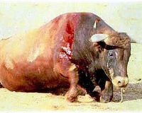 Stop Bullfighting in Colombia