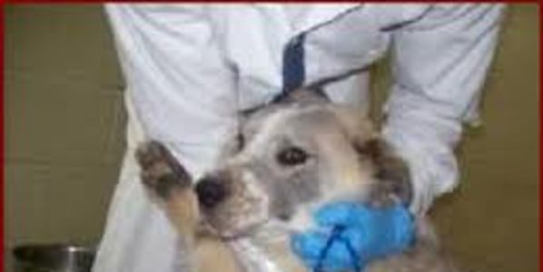 Stop use of illegal Heart Stick euthanasia in PUTNAM Co.