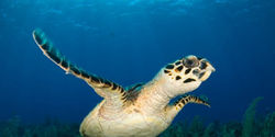 Save Sea Turtles From Drowning
