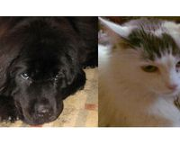 Tell Rhode Island Lawmakers: Pass REAL Laws to Protect Dogs and Cats From Mutilation
