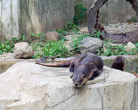 Tell the Illinois Department of Natural Resources to ban the hunting of rivers otters