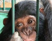End Airline Transportation of Primates for Research