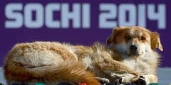 Send thanks to HSI on info how to adopt a Sochi stray dog