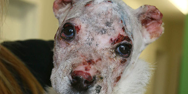 Justice for Nero: 7-week-old puppy set on fire; Find and Convict His Abuser