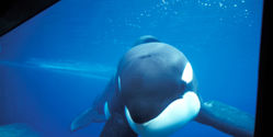 Help Animals Imprisoned by SeaWorld