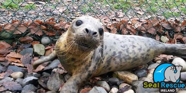 Keep Seal Rescue Ireland open - Government funding needed now!