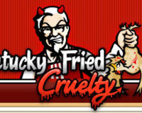 Stop the KFC Cruelty today!