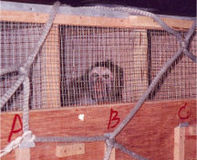 Tell Air France to Stop Transporting Research Primates
