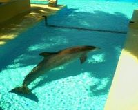 Put An End To Dolphin Death Pools In Las Vegas