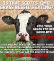 STOP SCOTTS' GMO GRASS IN ITS TRACKS NOW