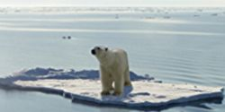 List the Polar Bear as Endangered Species