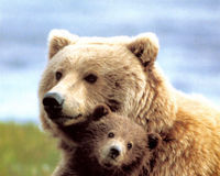 Stop the Grizzly Bear Hunt in B.C.