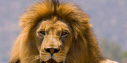 Save Lions and Other Rare Animals