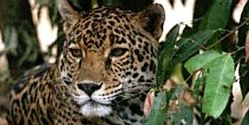 Keep Protection for Endangered Species at U.S. Border