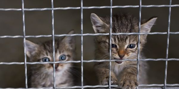 petition: Demand All States Make All Animal Abuse a Felony Now