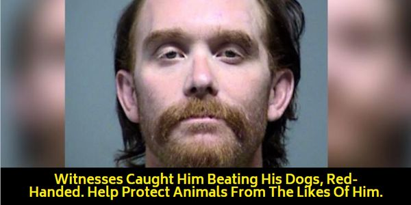 animal abuser