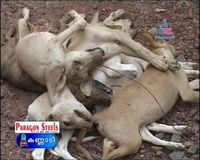 BOYCOTT KERALA TOURISM TO SAVE ANIMAL SLAUGHTER
