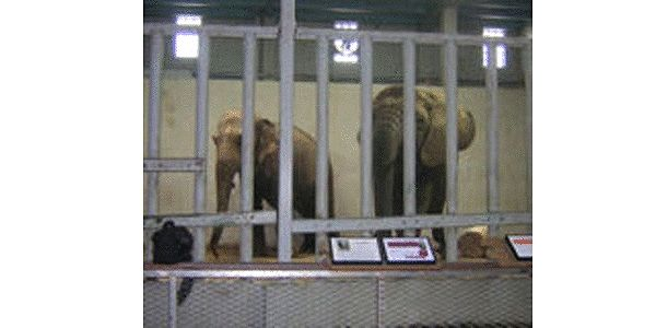 Send Kansas Zoo Elephants to a Sanctuary