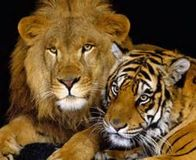 Ban the Export of Tiger and Lion Bones from the U.S.
