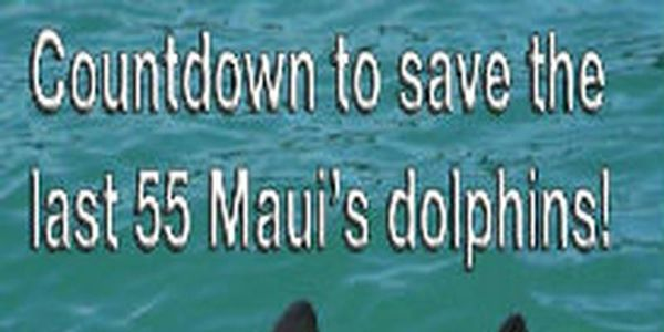 Maui's dolphins Need Your Help