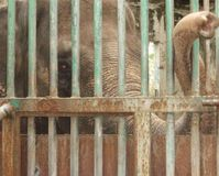 Sanctuary for Mali, the Manila Zoo Elephant
