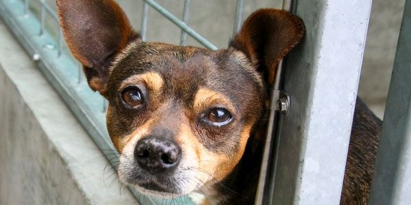 STOP MURDERING DOGS AND CATS AT ORANGE COUNTY ANIMAL SHELTER IN ORLANDO FLORIDA