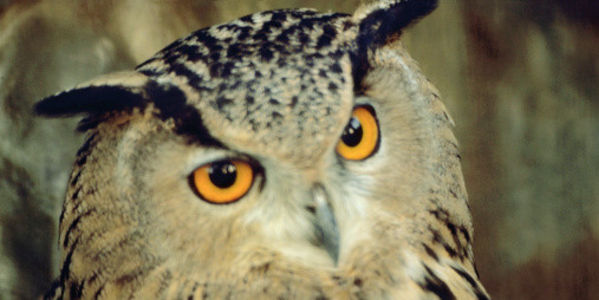 Shut Down Japanese Owl Cafes!