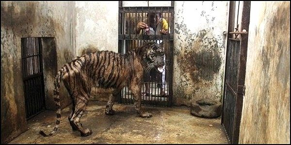 Close the Surabaya Zoo in Indonesia