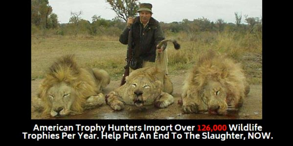 Photo of trophy hunter standing over dead lions