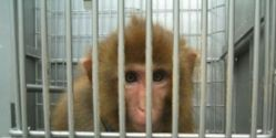 Urge China Eastern Airlines to Stop Transporting Primates for Research