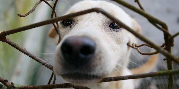 Puppy behind wire fence