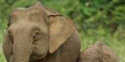 Take down the video of Shanthi the elephant performing tricks and playing the harmonica.