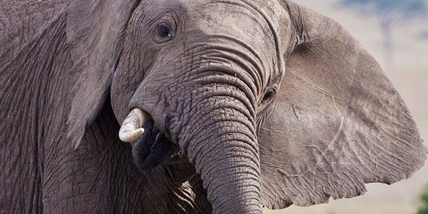 Say no to a school in Namibia raffling off the life of a rare desert elephant to hunters