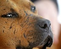 CNN LET VICK'S PITS VOICES BE HEARD: Invite Jim Gorant, author of