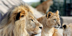 TELL COPENHAGEN ZOO TO STOP KILLING HEALTHY ANIMALS!!