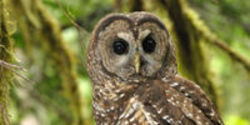 Save the Northern Spotted Owl