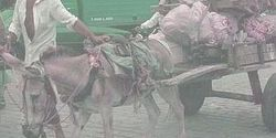 Donkeys, Shocking Cruelty