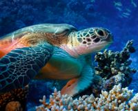Save Our Vanishing Coral Reefs