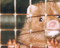 Ban Fur Farming in Sweden!