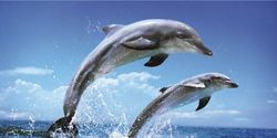 Save the Dolphins of Japan