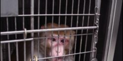 Air France: Stop Shipping Primates to Laboratories
