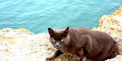 Jetty Cats in Long Beach Need a Temporary Shelter & Feeding Station