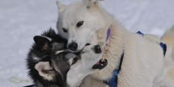 Prosecute Man Who Abused His Sled Dogs In Aspen & Strengthen Colorado Laws On Animal Abuse!!!